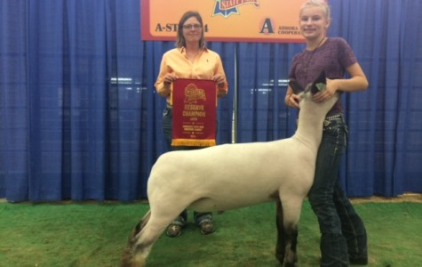 State Fair provides select FFA students chance to show livestock at higher level