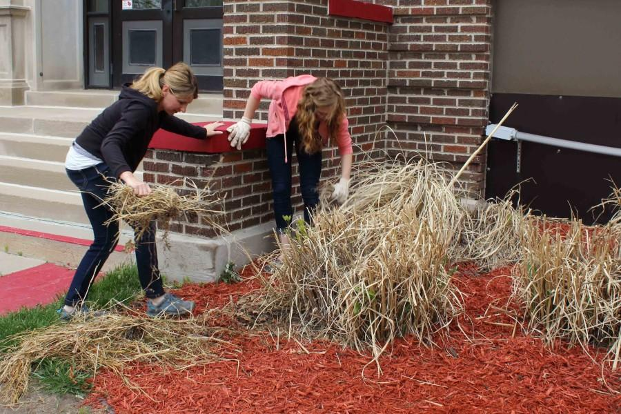 Agriculture+teacher+Jenny+Kocian+helps+sophomore+Brandy+B.+trim+and+clean+out+the+ornamental+grass.+The+dead+grass+needs+to+be+cut+down+every+spring+in+order+to+grow+back.